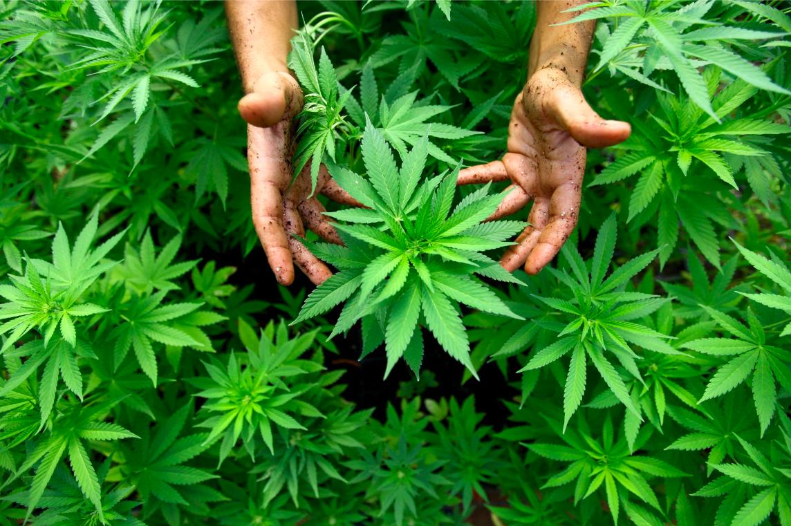 Las 5 Mayores Oportunidades de La Educación en Cannabis Medicinal en México
